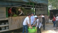 Tuổi trẻ Thanh Hóa tiếp tục bán dưa hỗ trợ nông dân Quảng Ngãi
