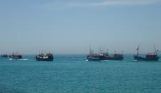 Thanh Hóa: Hơn 1.200 tàu thuyền vẫn đang hoạt động trên biển