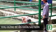 Lễ 2/9 người dân Sài Gòn nên trải nghiệm gì?