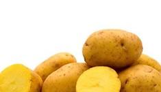 Tác dụng chữa bệnh của khoai tây