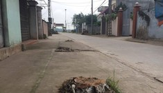 Đòi lại vỉa hè ở Hà Nội: Cây xanh có tội gì mà bị chặt?