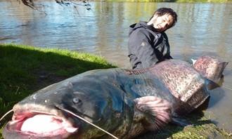 Cần thủ sốc khi thấy cá khổng lồ dài gần 3 mét