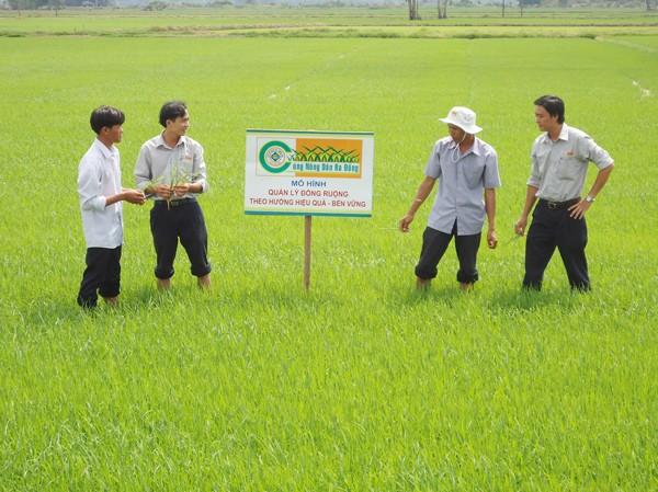 Thanh niên hỗ trợ chuyển giao khoa học kỹ thuật phòng chống sâu bệnh cho nông dân An Giang