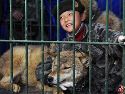 Cha nhốt con gái cùng chó sói để luyện lòng dũng cảm