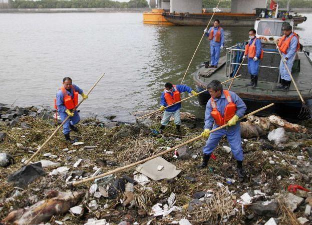 Các nhân viên thu gom xác lợn chết trên sông ở Thượng Hải
