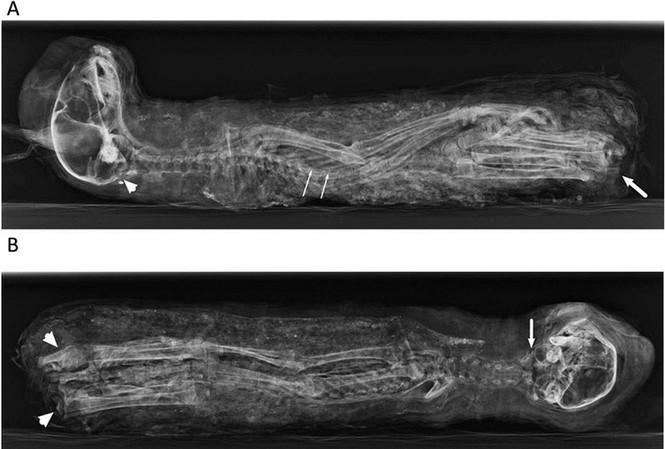 Người Ai Cập cổ dùng xác ướp mèo con làm đồ tế lễ