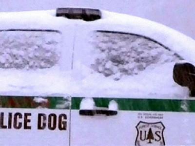 Chó suýt bắn chết cảnh sát
