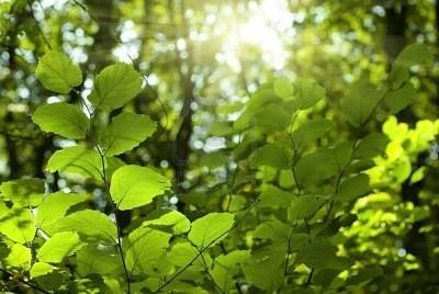 Ngộ độc vì chữa bệnh bằng lá rừng