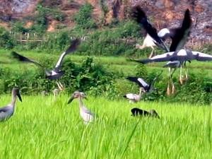 Xuất hiện nhiều chim lạ gần thủy điện Lai Châu