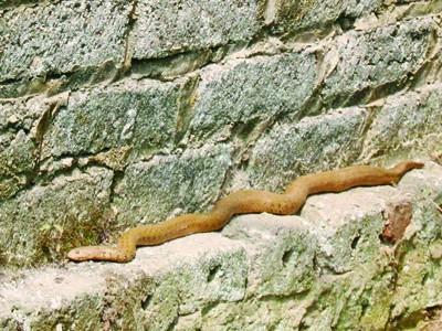 Hàng ngàn người khấn vái một con rắn