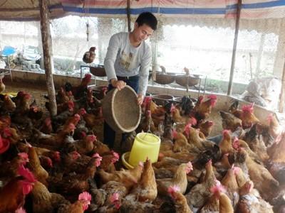 Thị trường thức ăn chăn nuôi: Thất thế vì đói vốn