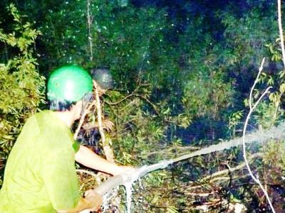 Chữa cháy rừng U Minh hạ  Ảnh: tiến hưng