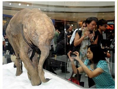 Xác voi ma mút con 10.000 năm tuổi
