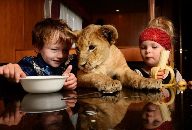 Ấn tượng ảnh em bé cùng sư tử