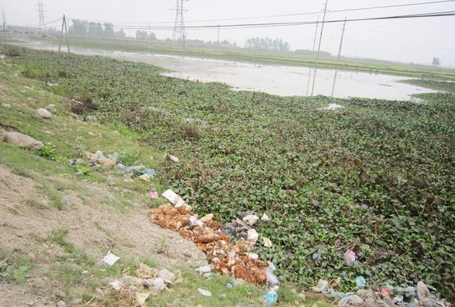Gà chết đổ bên sông Thái dọc quốc lộ 48B đoạn qua xã Quỳnh Mỹ và Thị trấn Cầu Giát