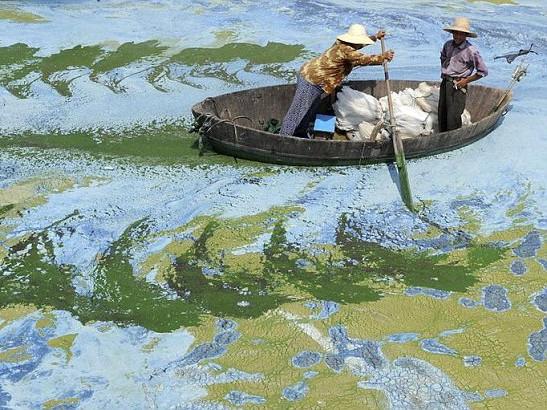 Hồ Sào Hồ, thuộc Hợp Phì, tỉnh An Huy chứa đầy chất độc