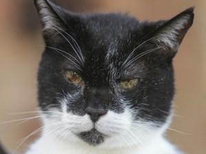 Con mèo già nhất thế giới đón sinh nhật 27 tuổi