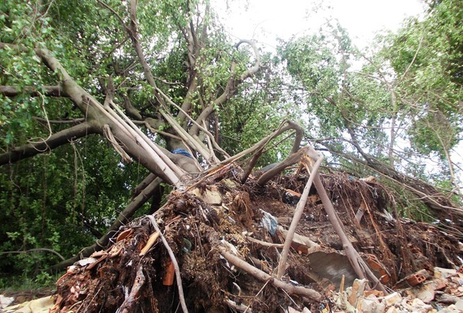 Bình Dương 'thất thần' sau bão số 1