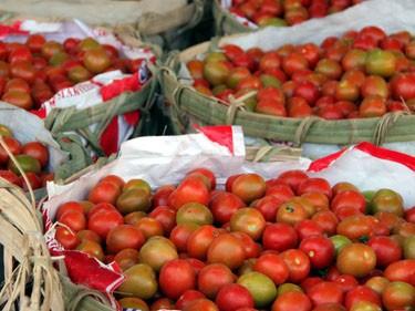 Lâm Đồng: giá cà chua tăng kỷ lục