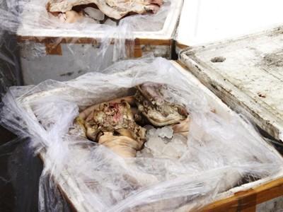 Bắt 300kg thịt, nội tạng thối