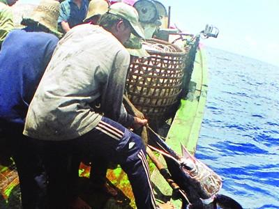 Hệ thống quan sát qua vệ tinh: Kết nối hơn 3.000 tàu cá