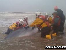 Cá voi bị mắc cạn và chết tại bờ biển Scotland