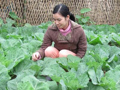 Rau xanh Lạng Sơn tại Hà Nội