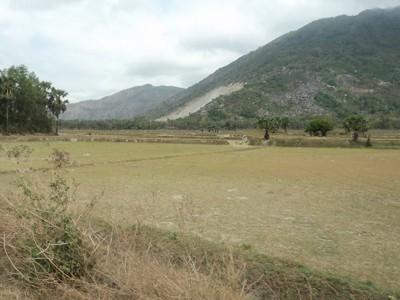 Tại huyện Tri Tôn (An Giang), đồng khô cỏ cháy Ảnh: TRẦN NGHĨA