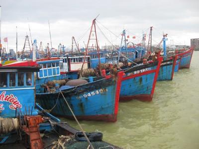 Nhật muốn đóng tàu lớn cho ngư dân miền Trung