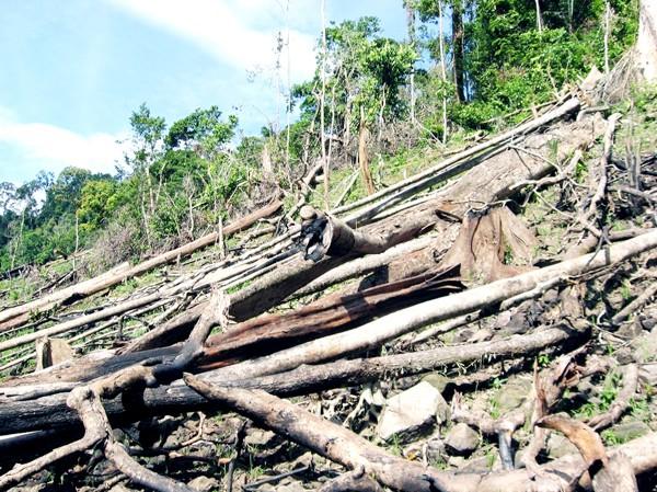 Thủy điện mọc lên, tái tạo rừng đi xuống