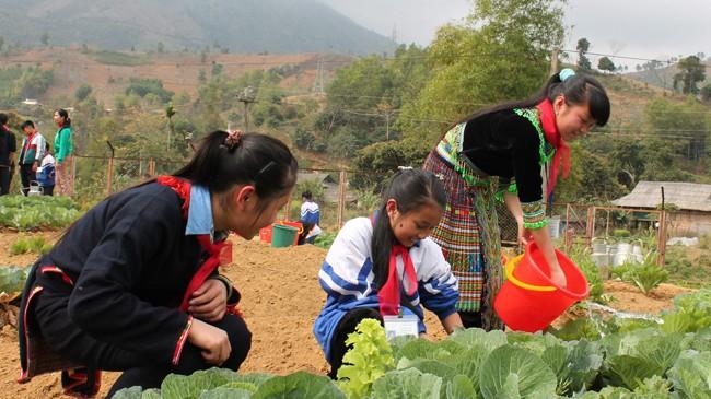 Những vườn rau xanh tốt của học trò vùng cao Yên Bái. Ảnh: Duy Ngợi.