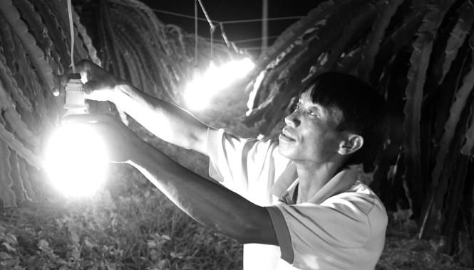 Ông Nguyễn Văn Linh sử dụng bóng đèn tiết kiệm điện kích thích thanh long ra hoa trái vụ thay bóng đèn sợi đốt. Ảnh: ĐD.