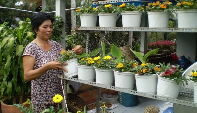Bà Trần Kim Loan chăm sóc hoa Tết. Ảnh: Trần Minh Tạo.