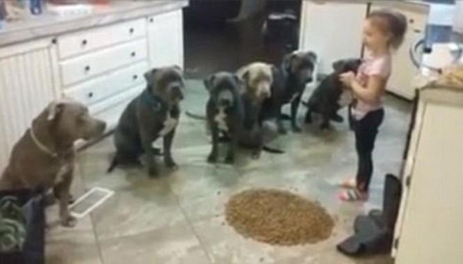 Cô bé 4 tuổi luyện chó siêu đẳng