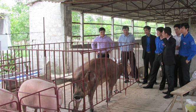 Cán bộ Trung ương Đoàn và Tỉnh Đoàn Thanh Hóa thăm trang trại phát triển kinh tế của anh Lê Văn Đức. Ảnh: Hoàng Lam.