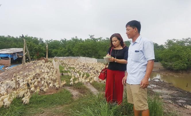 Ông Ðoàn Văn Vươn và đàn vịt 10 ngày tuổi (cùng tác giả).