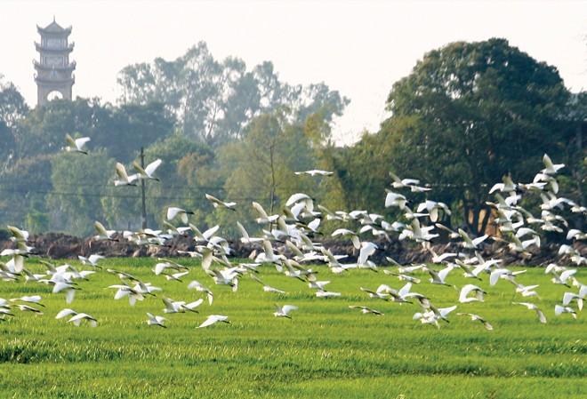 Những mùa chim thương mến