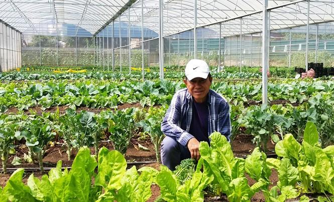Ông Low Kok Chiang trong trang trại rau.