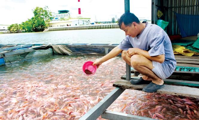 Ông Mai Hoàng Thông người duy nhất còn nuôi cá cạnh nhà máy giấy Lee & Man đang cho cá ăn trong tâm trạng lo lắng. Ảnh: Nhật Huy.