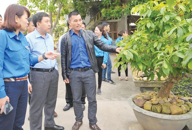 Bí thư Thường trực T.Ư Đoàn Nguyễn Mạnh Dũng thăm mô hình trồng mai của anh Phạm Văn Hoàn. Ảnh: Xuân Tùng.