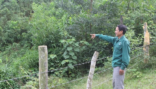 Hơn 300 ha rừng của Cty Cao su Hương Khê tại xã Hòa Hải (Hương Khê, Hà Tĩnh) bị người dân ngang nhiên xâm chiếm