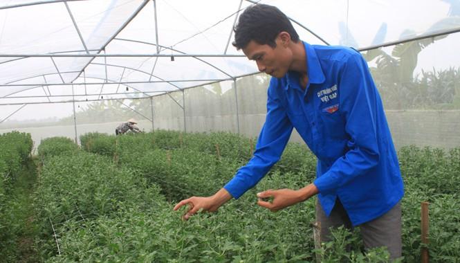 Anh Trịnh Quốc Toản bên luống hoa cúc trong trang trại của mình tại xã Yên Ninh, huyện Yên Định (Thanh Hóa). Ảnh: Hoàng Lam