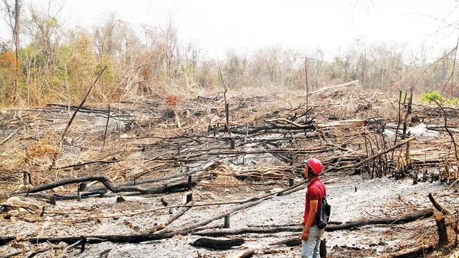Nhiều diện tích rừng bị phá làm nương rẫy. Ảnh: L.T