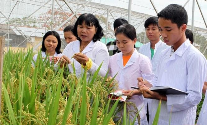 GS.TS Nguyễn Thị Lang đang hướng dẫn sinh viên