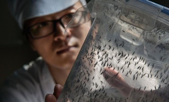 Bên trong nhà máy sản xuất muỗi ở Quảng Châu.