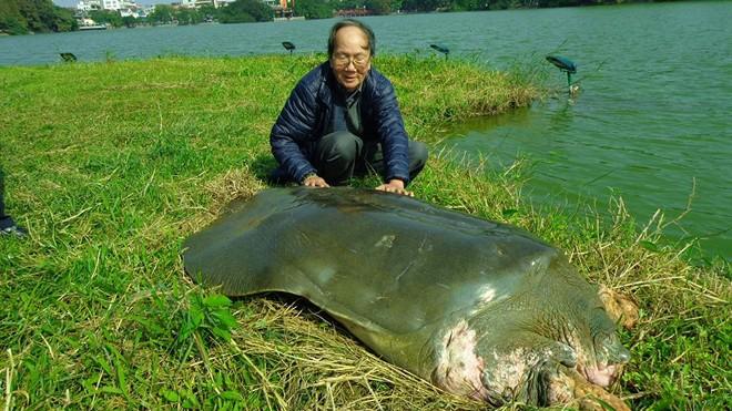 Cụ rùa Hồ Gươm lúc sống. Ảnh: FB Ha Dinh Duc