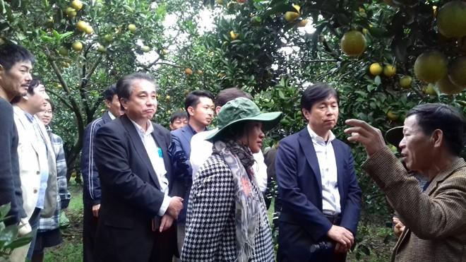 Nhật Bản sang thăm mô hình làm cam sạch tại Cty CP Trang trại Nông sản Phủ Quỳ (Quỳ Hợp, Nghệ An)