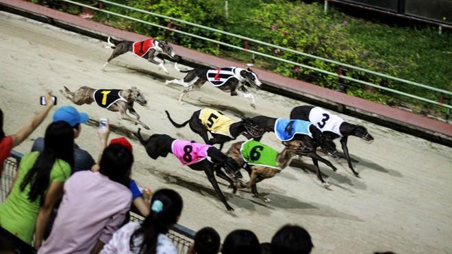 Đua chó ở thành phố Vũng Tàu. Ảnh: PV