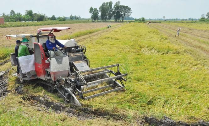 Máy đang gặt lúa của ông Đỗ Văn Tuấn . Ảnh: Hòa Hội