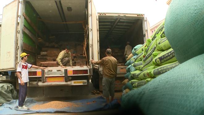 Sau khi đưa số gỗ Đinh Hương lên xe, các đối tượng dùng bao tải lúa, ngô che đậy lại để tránh tai mắt công an.